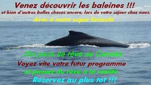 Baleine s 3